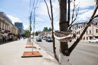 засохшие деревья на проспекте, Фото: 4
