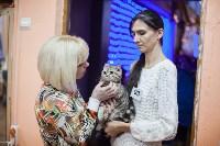 В Туле прошла выставка «Пряничные кошки» , Фото: 87