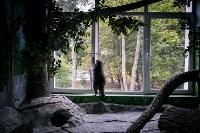Тульский экзотариум: животные, Фото: 49