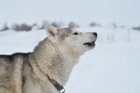 Праздник северных собак на Куликовом поле , Фото: 23