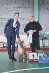 Выставка собак в Туле 26.01, Фото: 70