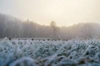 Ледяное утро в Центральном парке, Фото: 14