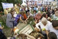 Праздник урожая в Новомосковске, Фото: 69