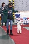 Выставка собак в Туле 26.01, Фото: 11