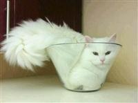 Жидкие коты, Фото: 4