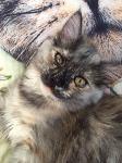 Тульские коты, которых достали хозяева на самоизоляции, Фото: 35