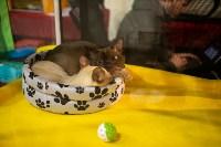 Пряничные кошки, Фото: 34