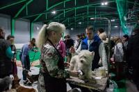 Выставка собак в Туле, Фото: 73