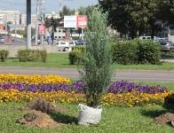 Высадка деревьев и растений ко Дню города, Фото: 1