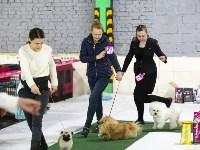 Выставка собак в Туле 14.04.19, Фото: 8