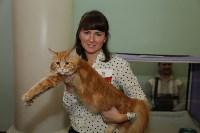 Выставка кошек. 21.12.2014, Фото: 33