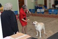 """Выставки собак в ДК """"Косогорец"""", Фото: 35"""