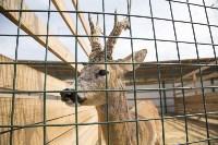 Зоопарк на набережной Упы в Туле, Фото: 11