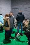 Выставка собак в Туле, Фото: 76
