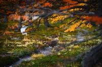 Куда поехать этой осенью?, Фото: 63