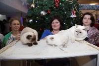 В Туле прошла выставка «Пряничные кошки» , Фото: 76