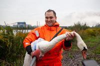 В Туле спасли лебедя с одним крылом, Фото: 29