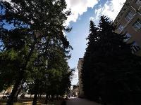 В Туле гибнут деревья, Фото: 49