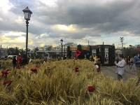 Цветочный джем: Тульское поле в Москве, Фото: 7