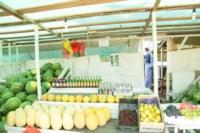 Рейд по незаконной продаже арбузов, Фото: 13