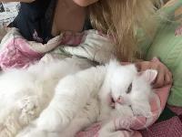Тульские коты, которых достали хозяева на самоизоляции, Фото: 25