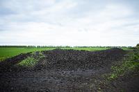 В Тульской области Богородицкий район атаковали мошки, Фото: 9