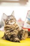 """Выставка """"Пряничные кошки"""". 15-16 августа 2015 года., Фото: 29"""