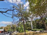 В Туле гибнут деревья, Фото: 34
