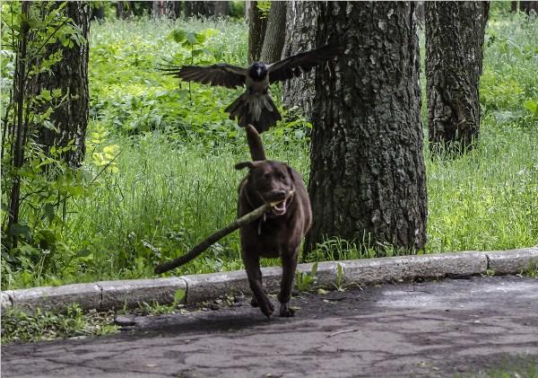 Охота на охотника..