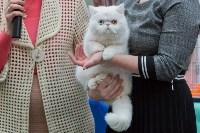 Выставка кошек в Туле, Фото: 48