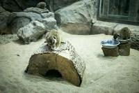 Тульский экзотариум: животные, Фото: 3