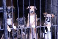 В какой ветеринарной клинике  лечить своего питомца, Фото: 3