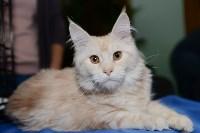 Выставка кошек в Туле, Фото: 16
