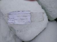 Незаконная свалка химикатов в Туле, Фото: 13