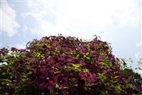 Шесть соток в Крапивне, Фото: 2