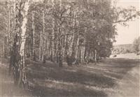 Толстой покупал березы на гонорар от «Войны и мира», Фото: 7