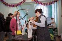 Выставка собак в Туле, 29.11.2015, Фото: 54