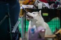 Выставка собак в Туле, Фото: 22