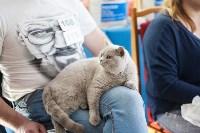 В Туле прошла выставка «Пряничные кошки» , Фото: 42