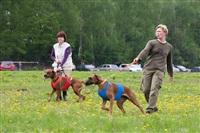 В Туле состоялись собачьи бега, Фото: 31
