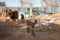 Семён Яблоновский и его ферма, Фото: 29