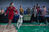 Выставка собак в Туле, Фото: 30