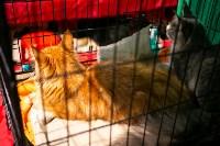 Пряничные кошки, Фото: 40