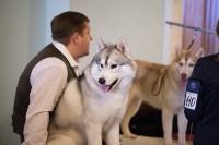Выставка собак в Туле, 29.11.2015, Фото: 3
