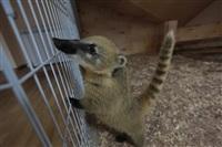 трогательный зоопарк, Фото: 35