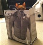 Мускулистые коты, Фото: 7