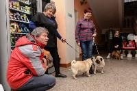 """Выставки собак в ДК """"Косогорец"""", Фото: 65"""