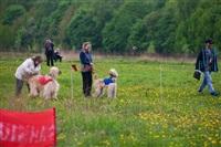 В Туле состоялись собачьи бега, Фото: 1
