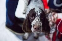 Выставка собак в Туле, Фото: 43