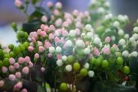 Цветы , Фото: 16